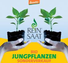 Jungpflanzenverkauf bei ReinSaat | yogaguide
