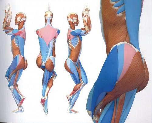Yoga Anatomie 3D | Band 2 | Die Haltungen | Yoga Guide