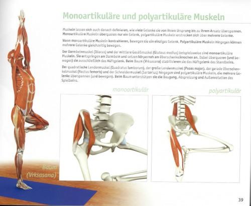 Großartig Anatomie Des Yoga Zeitgenössisch - Anatomie Von ...