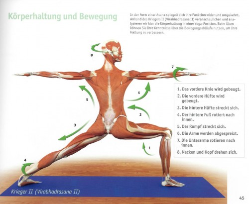 the key poses of yoga ray long pdf